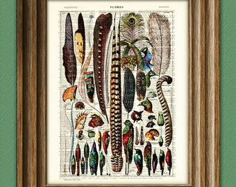 Colorful PLUMES study of the birds and their feathers of the World beautifully upcycled vintage dictionary page book art print
