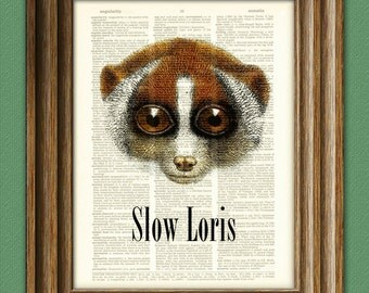 Slow Loris art print illustration beautifully upcycled dictionary page book art print