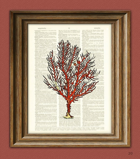 Red FAN CORAL of the ocean illustration beautifully upcycled dictionary page book art print
