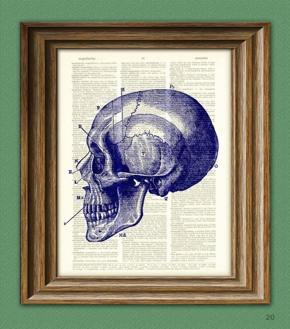 Diagram of a BLUE SKULL Side View over an upcycled dictionary page book art print