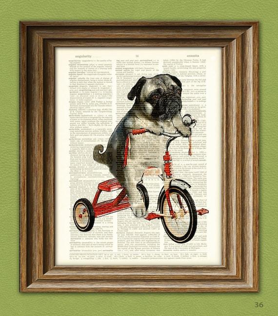 http://www.etsy.com/uk/listing/75507619/pug-art-print-mike-the-trike-pug-dog-on?ref=sr_gallery_3&sref=sr_e0fd03e13cb3130c8595adae29e95428d8a4334836ad572291ea142ec3dac2f4_1387403365_14086924_pug&ga_search_query=pug&ga_view_type=gallery&ga_ship_to=GB&ga_search_type=all