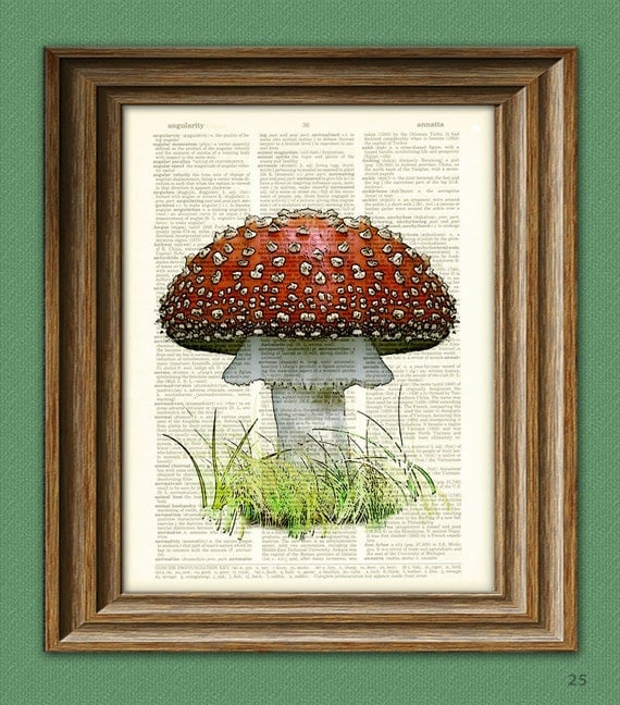 Red MUSHROOM Fly Agaric toadstool botanical illustration beautifully upcycled dictionary page book art print