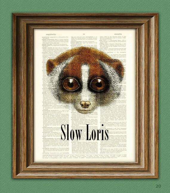 Slow Loris art print illustration beautifully upcycled dictionary page book art print