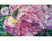 Afternoon Peony giclee print from original watercolor