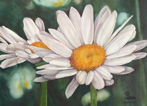 daisy art print, watercolor flowers, white daisies