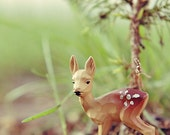 Little Fawn - Original Signed Photograph