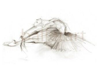 Ballet Art - dying white swan - artwork - pencil drawing - wall art - prints, illustrations, black and white art, wall art