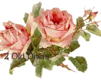 Vintage Edwardian C. Klein Shabby Rose 18 Decals