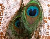 Peacock Pretties