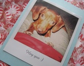 Hey You Faux Polaroid Dachsund Puppy Card