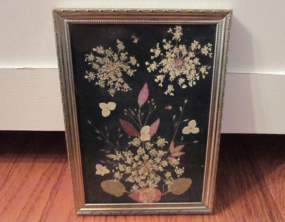 vintage pressed flowers under glass, gold frame, dried botanical flora and fauna