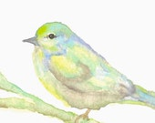 Nature Bird Watercolor Painting Original Art