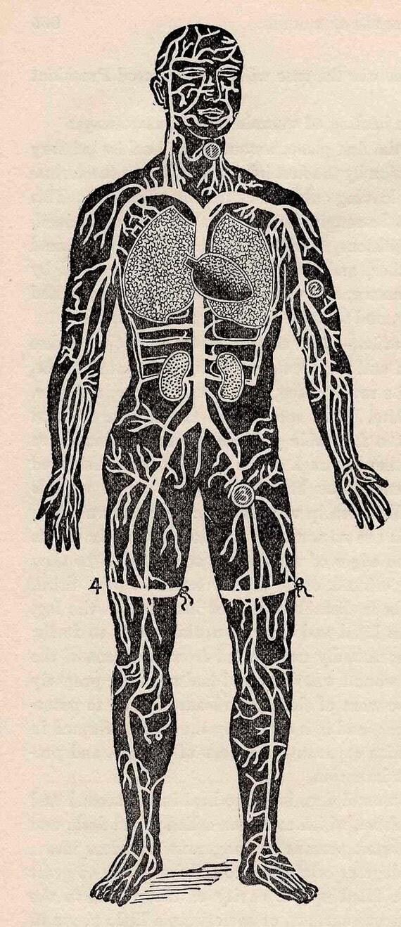 1901 human anatomy original antique anatomy print of surgical disease