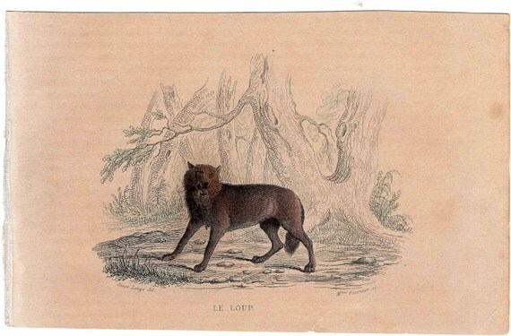 1837 wolf original antique animal print 19th century hand colored engraving -  le loup