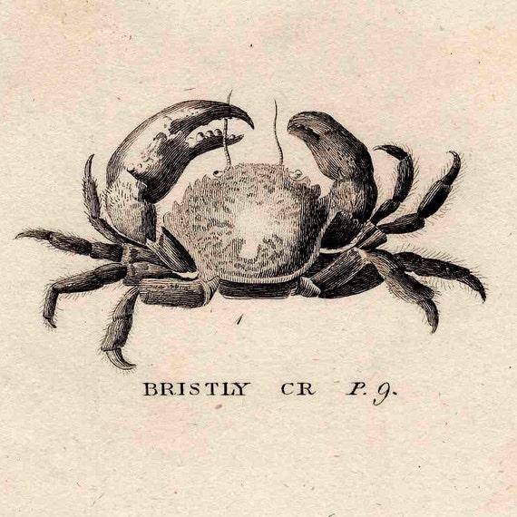 1812 sea life original antique engraving - grub clawed and bristly crabs