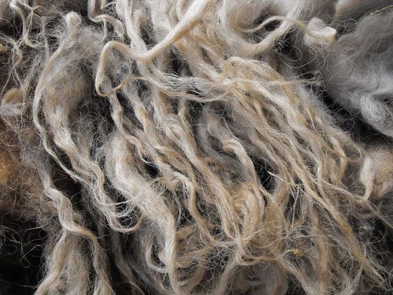 Raw Hungarian Racka Fleece - 400 g