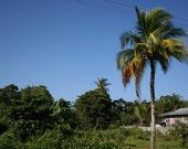palm tree guyana 5x7