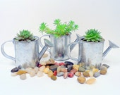 24 Succulent Plants in Watering Cans  for FavoRs, Rock Your Party with