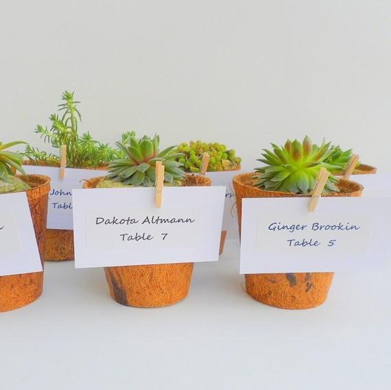 80 Succulent Plants in  Coconut Pots, Garden Pary Favors
