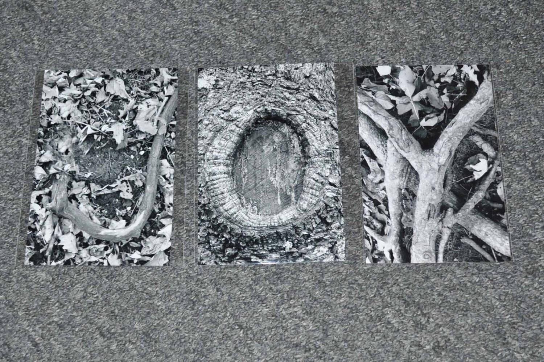 Nature Lettre Art