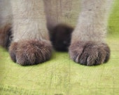 Paw - 5x5 Fine Art Photographic Print