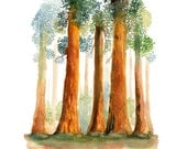 Redwoods Print from my original watercolor painting 8x10 inch