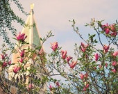 BOGO SALE Al Magnolia Campanile 5x7 (13x18cm) Fine Art Travel Photography - Europe Italy home decor wedding gift romantic floral unique