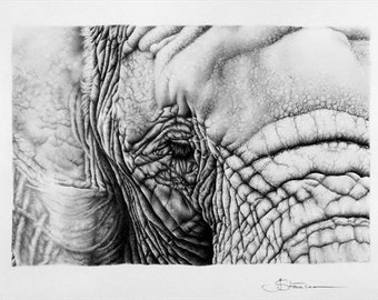 Elephant Pencil Drawing Fine Art Signed Print