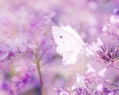 White Violet - Butterfly Photograph - 8x10 Nature Print