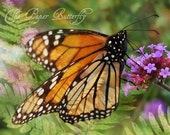 Majesty - Monarch Butterfly Photograph - 5x7 Nature Print