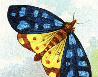 Package of 12 Blank Note Cards,  Butterflies