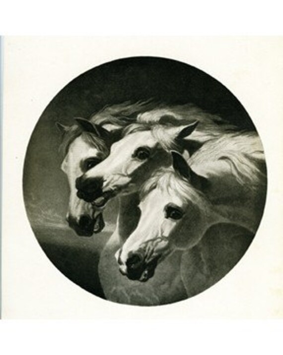 8x10 Print  -3 Horses, From  1909  Illustration