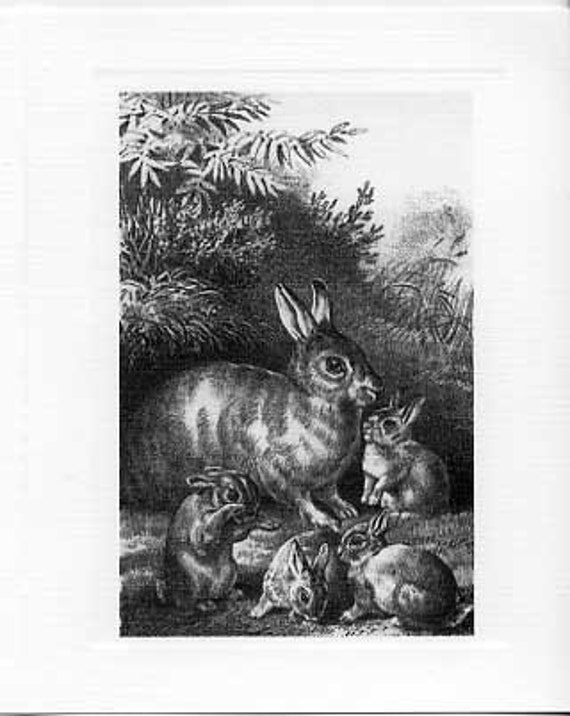 Package of 12 Blank Note Cards, Rabbits
