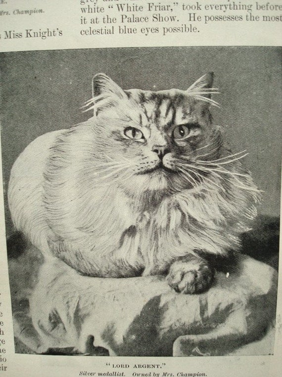 Cats as Cup Winners- Vintage Magazine Illustration 1890s