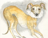 Italian Greyhound-8.5 x 11 Drucken