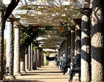 Nature's Shadowy Corridor