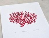 Sea Fan Coral / Gorgonacea 'specimen' - Limited edition one-colour screenprint