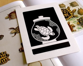 Curiosity Cabinet Series 2, No. 4 - Limited Edition Screenprint (Turtle)