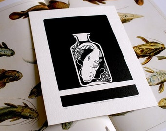 Curiosity Cabinet Series 2, No.5 - Limited Edition Screenprint (Catfish)