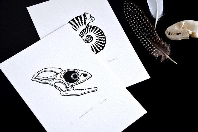 chameleon skull chamaeleonidae specimen noir by sakurasnow