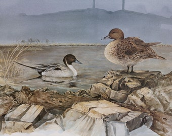 Pair of North American Pintails - Painting
