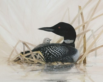 Loon with Baby - Painting