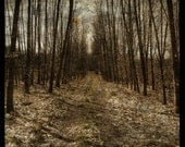 Alsace Forest Path No. 1 - 8 in x 8 in Fine Art Photograph - Tree Photography - Photos of Bare Trees - Forest Path Photo - Forest Wall Decor