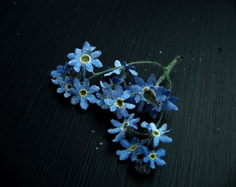 Dried Flowers Pale Blue Forget Me Not