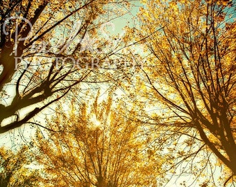 Golden Fall Leaves - 5x7 Photo