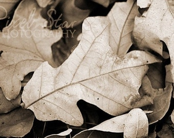 Black and White Fall Leaves - 5x7 Photograph