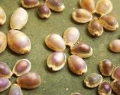 100 Purple Top Cowrie Shells