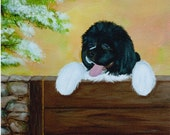 Newfoundland Dog  Fine Art Print   By Sharon Nummer