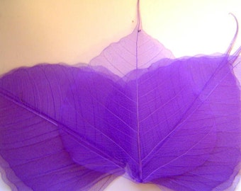 One Dozen Large Purple Skeleton Leaves Great for Corsages, Hair Clips, Paper Crafts