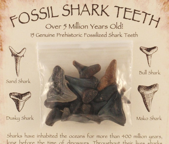 Fossil Shark Tooth Variety Pack